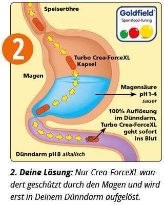 Crea-Force schützt das Creatin vor der Magensäure